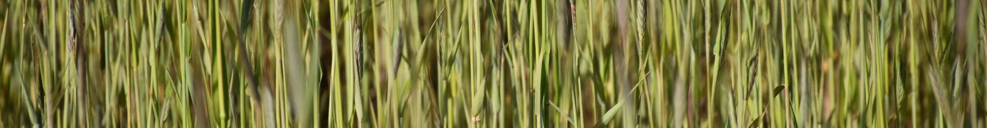 List protestacyjny do Redaktora Naczelnego  Tygodnika Polityka, przeciwko fałszywym informacjom dotyczącym rolnictwa ekologicznego i jego produktów