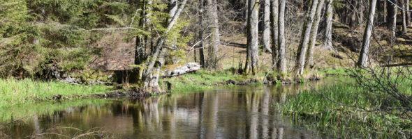 Stanowisko organizacji pozarządowych zaangażowanych w działania na rzecz dobrego stanu wód w sprawie polityki wodnej i zmian do ustawy Prawo Wodne