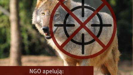 Stanowisko organizacji pozarządowych w sprawie ochrony wilka w Polsce