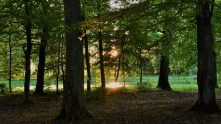 Apel w sprawie projektu ustawy o zamianie terenów leśnych na nieleśne